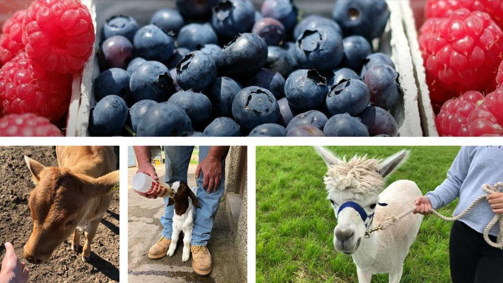 Farm-visits